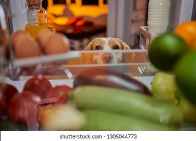 Dog stealing food from fridge. Picture taken from the inside of fridge.