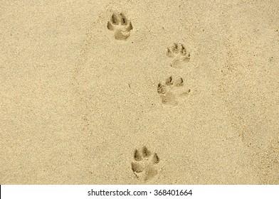 dog steps an footprints on the sand