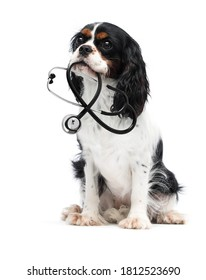 dog and stethoscope looking on a white background