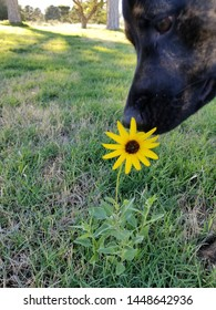 Dog stopping to smell the flowers.