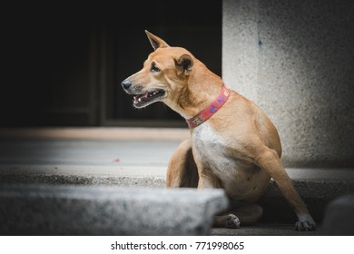 The dog stray in the  big city