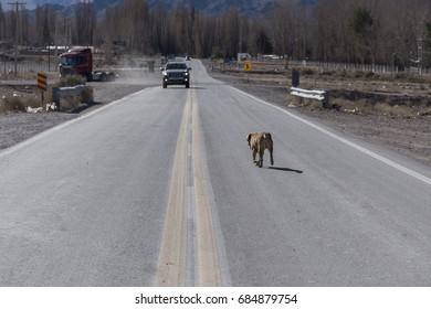 dog street