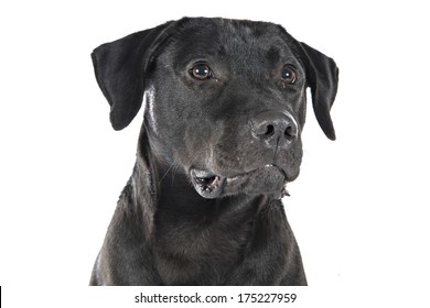 Dog studio image on white background