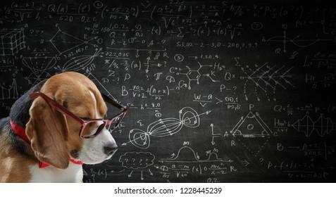 Dog study science. Mixed media