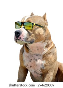 a dog in sun glasses a dog on a white background