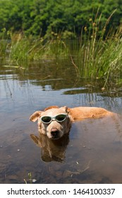 Dog with sunglasses on vacation