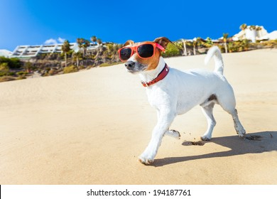 dog with sunglasses running at the beach on summer vacation holidays