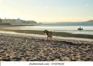 Dog in the sunset at beach