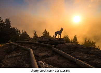 Dog at sunset from Mount Craig in North Carolina