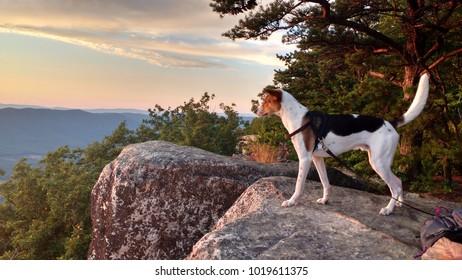 Dog sunset Tinker Cliffs