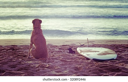 dog and surfboard on the beach at sunset