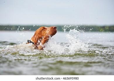 Dog swim