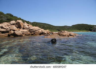 Dog swim at sea