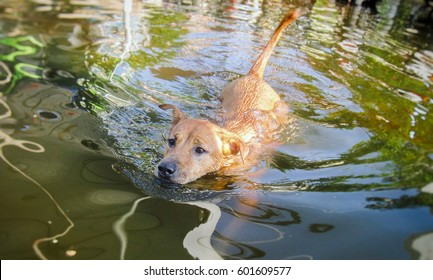 Dog swimming in area with flooding