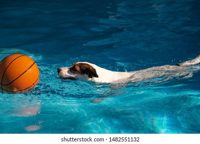 Dog swimming towards basketball in outdoors pool on a sunny summer day