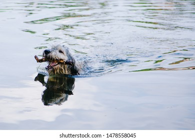Dog in Pond Images, Stock Photos & Vectors | Shutterstock