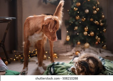 Dog, Tabby and happy cat. Christmas season 2017, new year, holidays and celebration