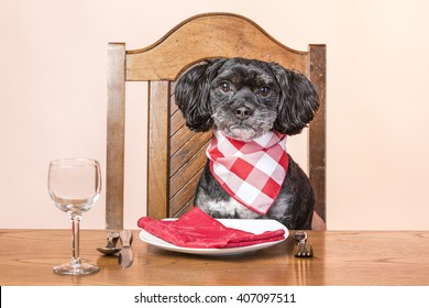 Dog at the table.