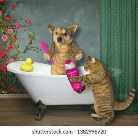 The dog takes a bath. It holds a comb. The cat gives it a shampoo.