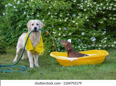 Dog taking a bath in the garden