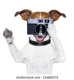 dog taking a photo with an old camera