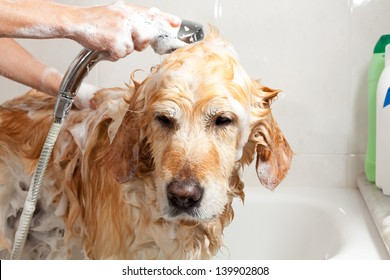 A dog taking a shower with soap and water