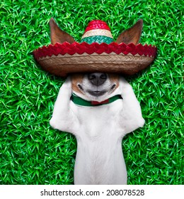 dog taking a siesta on an empty meadow with mexican sombrero  chilling out