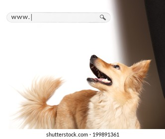Dog terrier looking up.Looking fresh and happy.Empty web address bar added on space for copy