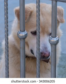Dog that are confined