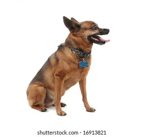 a dog that is panting on a white background