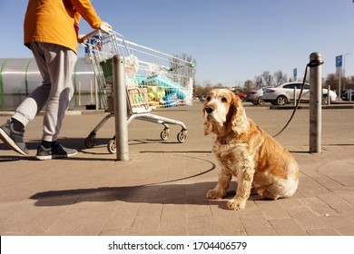 A dog tied with a leash to a column sits and waits for the owners to return, and a buyer passes by.