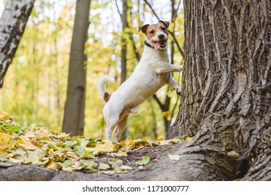 Dog tired to chase cat or squirrel standing under tree