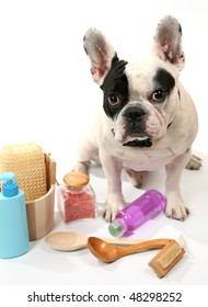 Dog and toilet accessories