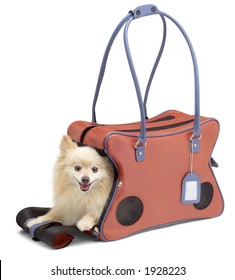 Dog in tote with clipping path.