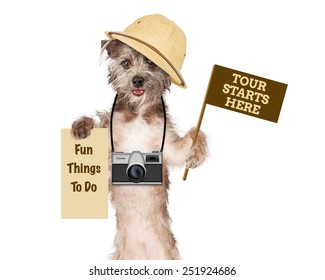 Dog tour guide with camera and signs