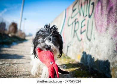 dog and toy