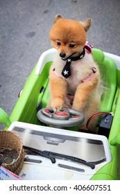 Dog in toy car