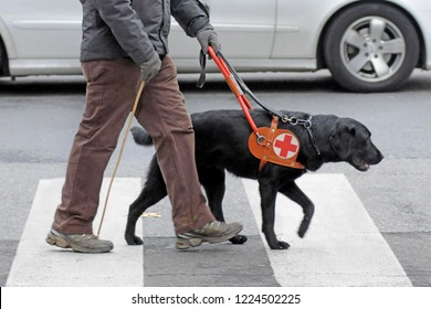 dog trained to help blind people to walk in the city