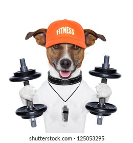 dog training with dumbbells and a whistle