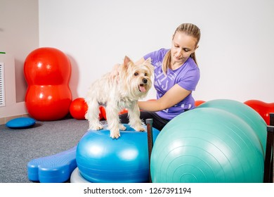 Dog training in the fitness club