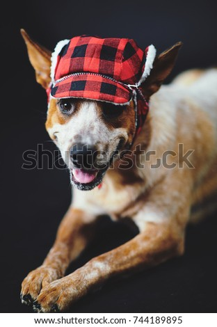 c24522e914c Dog Trapper Hat