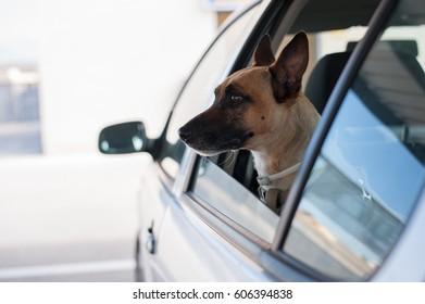 Dog traveling car road trip