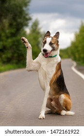 dog trick high five giving paw up swear uotdoor