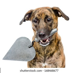 dog with trowel. isolated on white background