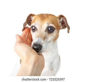 Dog trust. Owner care and help. Owner hand caresses a dog. Cute small pet sniffs hand.  White background