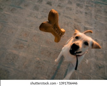Dog trying to capture his flying food