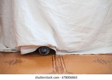 Dog under bed