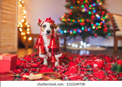 Dog under a christmas tree. Pet with gift. Happy New Year