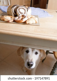 A dog under a table with various baked goods on top.