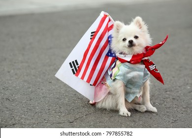 dog with US and South Korean flag symbolizing the two countries alliance and friendship